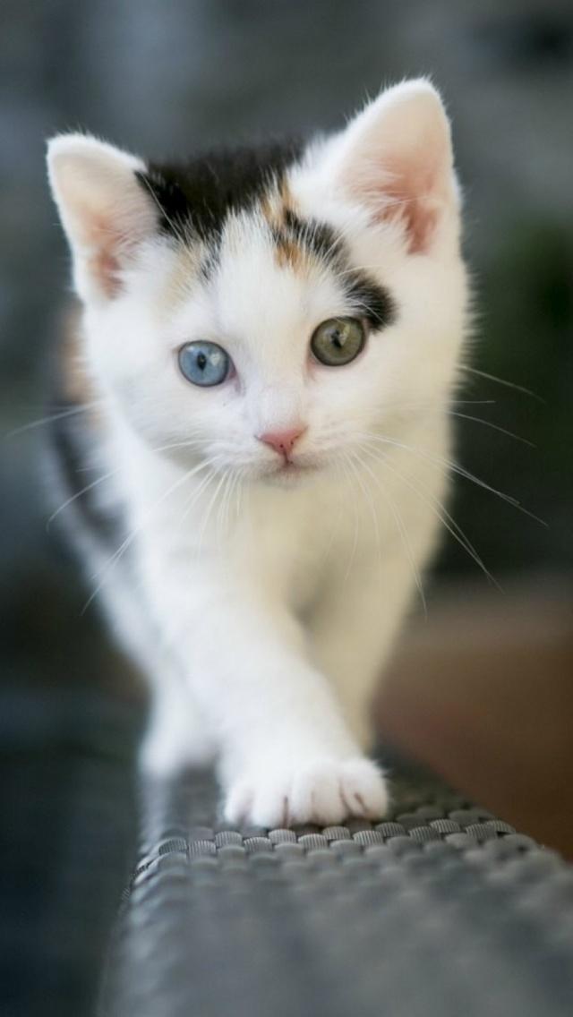 Cute Kitten Iphone Wallpaper Ios Mode