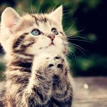 Cute Cat, Download Cute Cat Wallpapers