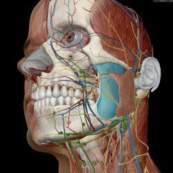 Human Anatomy Atlas, Download Human Anatomy Atlas 2020 For iOS
